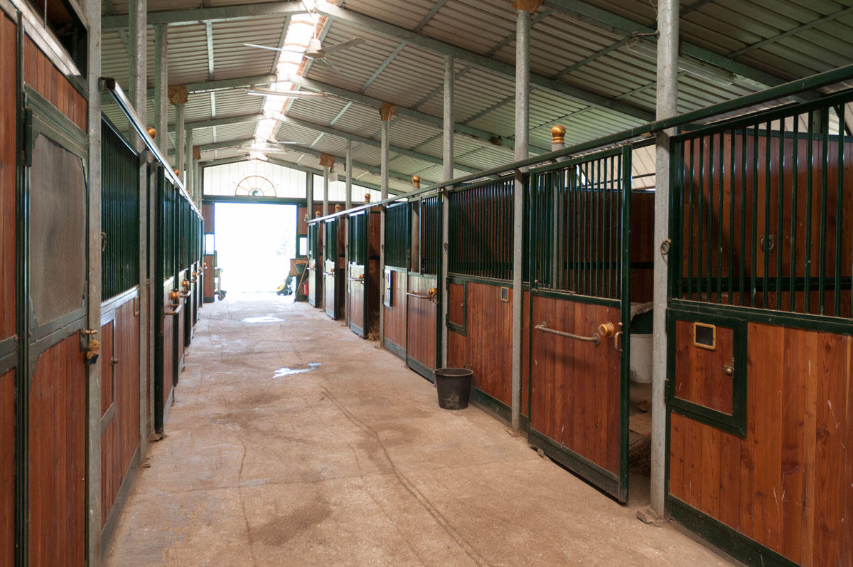 3 Reasons Why Steel Buildings Make Safe, Secure Horse Stables | MSC